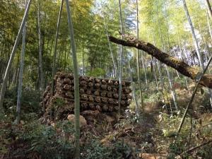 50.- Bamboo forest precut 1