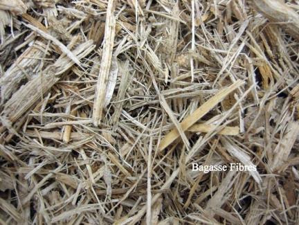 Bagasse fiberes