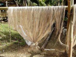 Banana fibres
